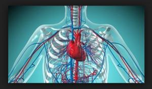Triglicérides Gordura, Infarto, Carboidratos – Acidente Vascular Cerebral (AVC)