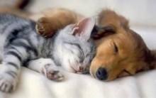 Hotel Para Cães E Gatos, Conforto E Segurança Enquanto Você Tira Suas Férias Viajando.
