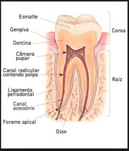 Como Limpar E Escovar Corretamente Os Dentes? Confira. Onde Comprar Escovas, Dicas E Maneiras Corretas Da Escovação De Dentes.