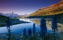 O Dia Mundial Do Meio Ambiente, Natureza É 05 De Junho. Confira.