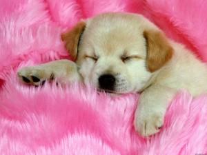 cachorro-capa