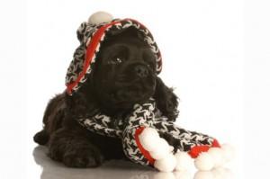 cachorro-inverno
