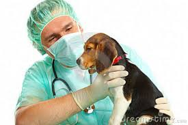consulta-veterinaria