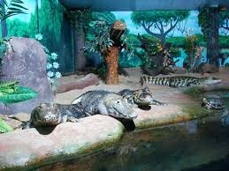 crocodilos-aquario-sp