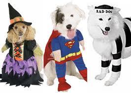 fantasias-cachorro