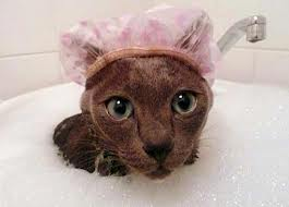 gato-com-touca-de-banho
