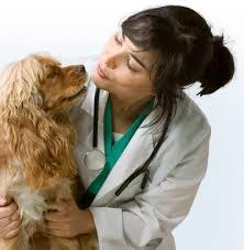 medicina-veterinaria