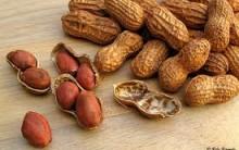 Vantagens de Consumir Amendoim – Benefícios Para a Saúde
