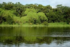bioma amazonia1 300x199 Os Biomas no Brasil   Principais Características