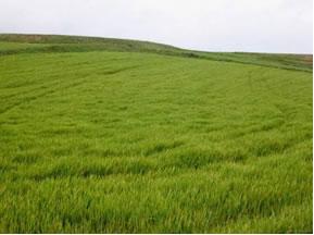 bioma brasil campos Os Biomas no Brasil   Principais Características