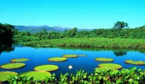 bioma brasil pantanal 300x175 Os Biomas no Brasil   Principais Características