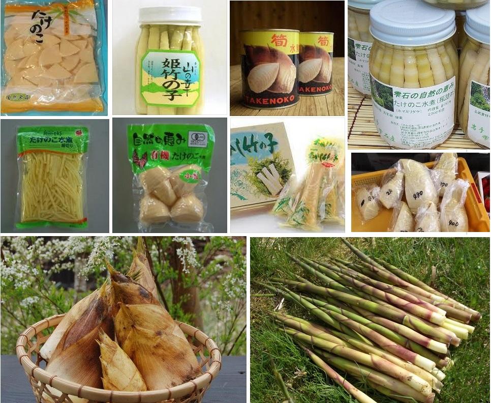 broto-bambu