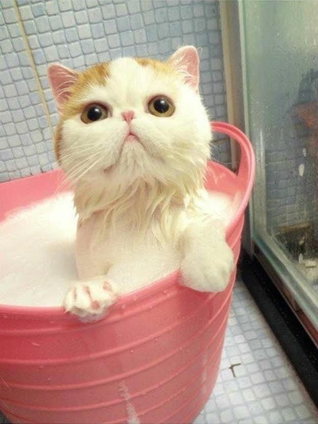 gato-tomando-banho