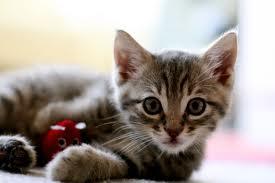 Doenças Mais Populares nos Gatos – Quais São e Como Prevenir