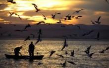 Ideias e Dicas Para Uma Boa Pescaria – Informações
