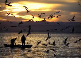 Pesca-pesqueiro-dicas
