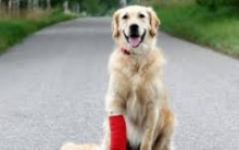 Fisioterapia Para Desenvolver Bem Estar do Animal de Estimação – Como Funciona