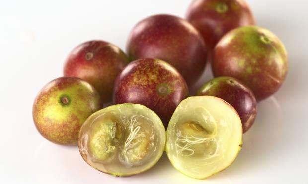 frutas-exoticas-camu-camu