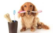 Quais São as Causas do Mau Hálito de Cães e Gatos – Como Prevenir e Cuidados