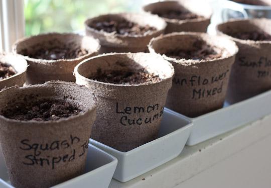 sementes-hortinha-aromatica