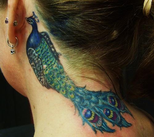 tatuagem-pavao