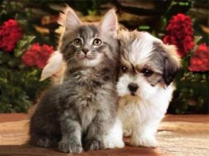 Alimentação Ideal do Animal de Estimação – Dicas e Cuidados