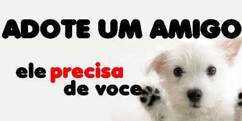 adote-um-cão