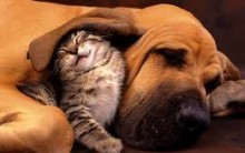 Como Cuidar do Animal de Estimação no Calor – Dicas