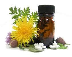 plantas-medicinais-dicas