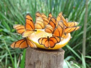 borboletario-flores-que-voam