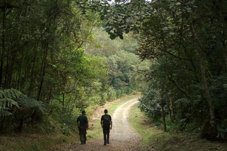paranapiacaba-trilha