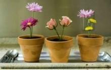 Vaso Flores Comestível – Passo a Passo