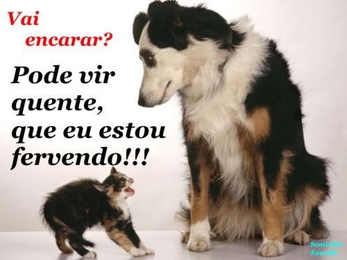 Cachorros Engraçados Com Frases Divertidas Imágenes De