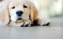 Doenças Caninas Provocadas por Carrapatos – Sintomas e Prevenção