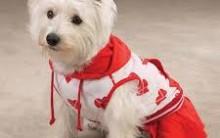 Roupinhas para Cães – Como Fazer, Vídeo e Molde