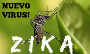 Zika Vírus – O Que é, Sintomas, Prevenção e Tratamento