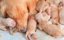 Caixa Maternidade Para Cães – Cuidados, Benefícios e Dicas