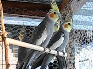 Viveiro para Pássaros – Materiais e Como fazer
