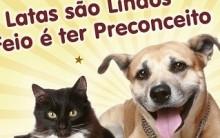 Adotar Cão ou Gato – O que é Preciso e Dicas
