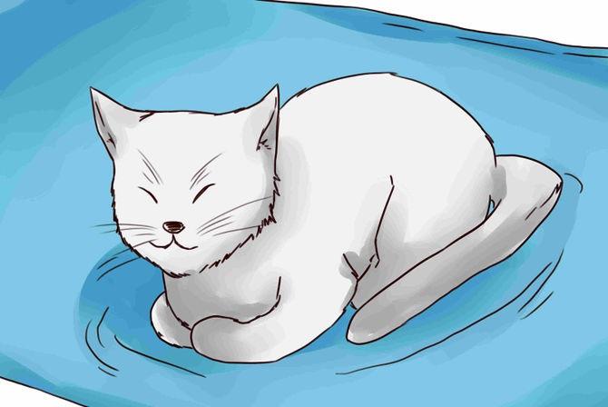 Gato-remédio-arrr