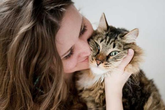 Gato-remédio-carinho