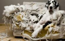 Cachorro Que Destrói os Objetos – Dicas de Como Evitar