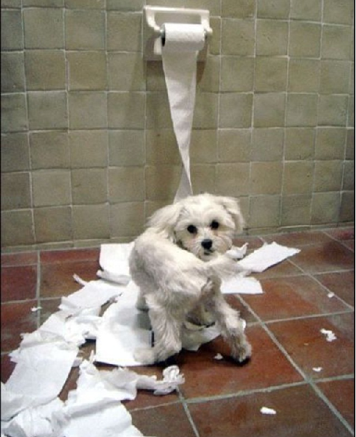 Cachorro-Que-Destrói-papel