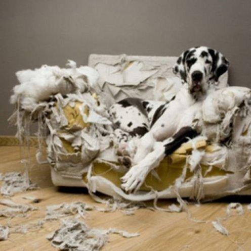 Cachorro-Que-Destrói