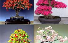 Bonsai – Quais os Significados e Cuidados.