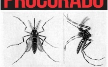 Mosquito Aedes Aegypti da Dengue a Zika – O Porque Tantas Doenças