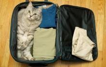 Como Preparar Gato Para Viajar – Cuidados e Dicas