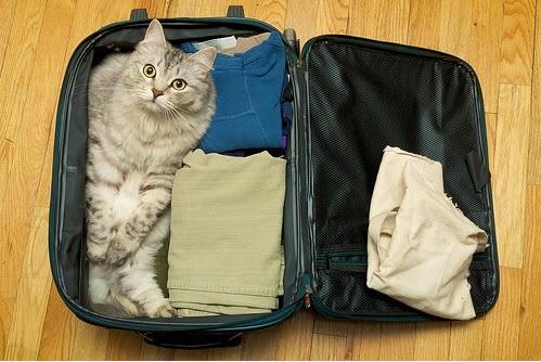 Como Preparar Gato Para Viajar - Cuidados e Dicas