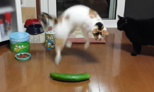 Gatos Medo de Pepino - Vídeo Viral