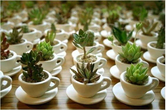 Plantas suculentas como cultivar e fazer mudas for Como cultivar plantas ornamentales